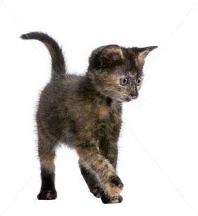 котята в дар тюмень фото #10