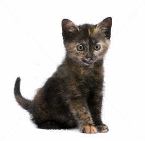 котята в дар тюмень фото #12